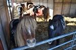 Ponykampen Manege de Bongerd