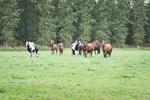Ponykamp zomervakantie