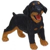 Rottweiler puppy beeldje staand 29 cm