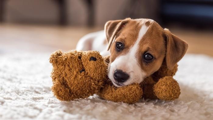 Hondennamen generator