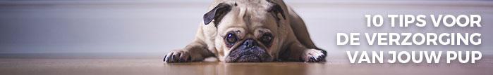 10 tips voor de verzorging van jouw pup